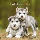 Calendario 2020 Puppies 30x30 cm