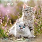 Calendario 2016 cats