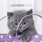 Calendario 2019 Kittens 30x30 cm
