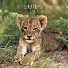 Calendario 2016 Animal Babies