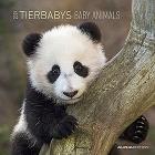 Calendario 2019 Baby Animals 30x30 cm