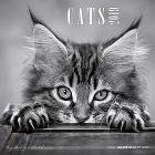 Calendario 2019 Cats by Sabine Rath 30x30 cm