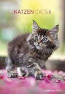 Calendario 2021 Cats 23,7x34