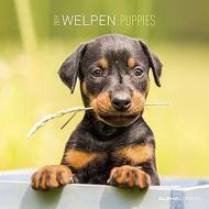 Calendario 2019 Puppies 30x30 cm