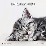 Calendario 2020 Kittens 30x30 cm