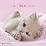 Calendario 2016 kittens