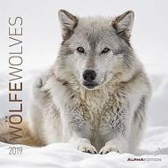 Calendario 2019 Wolves 30x30 cm