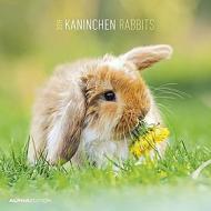 Calendario 2019 Rabbits 30x30 cm