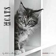 Calendario 2020 Cats by Sabine Rath 30x30 cm
