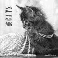 Calendario 2016 Cats By Sabine Rath
