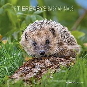 Calendario 2020 Baby Animals 30x30 cm