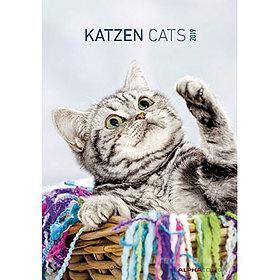 Calendario 2019 Cats 24x34 cm